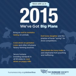Humane Society to target soring, slaughter in 2015