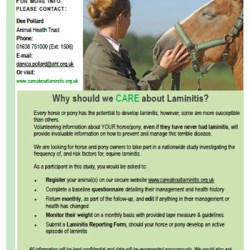 Horse owners urged to join long-term laminitis study