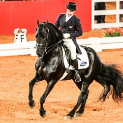 Jock Paget, Friesian superhorse to star at NZ HoY show