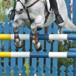 Fitness of showjumpers showed through in blood analysis