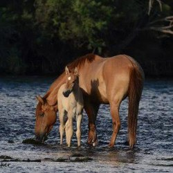 Lawmakers want progress over plan for Arizona's Salt River horses
