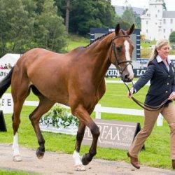 Blair Castle buzzing as European Eventing Champs kick off