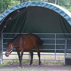 Researchers probe the shady world of paddock shelters for horses