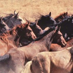 Protections for wild horses included in monster spending bill