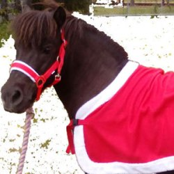 Santa's sack crisis: Horses make a special delivery
