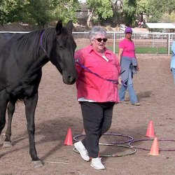 Horses helping people: Push to learn more on equine-assisted psychotherapy
