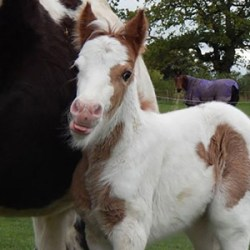 Brighter future ahead for homeless street pony and foal