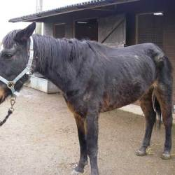British horse whisperer convicted over care of horses