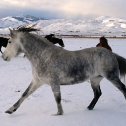 New year, new life for wild horse back at Idaho home