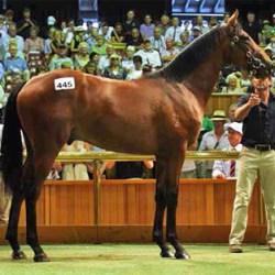 Frankel colt tops NZ yearling sale at $1.3 million