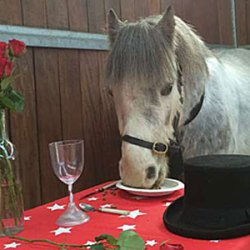 Romeo ready to roll for Valentine's Day