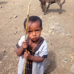 Desperate times for equines in Ethiopia as drought drags on