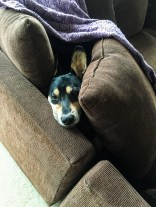 Kieffer & the Couch-13