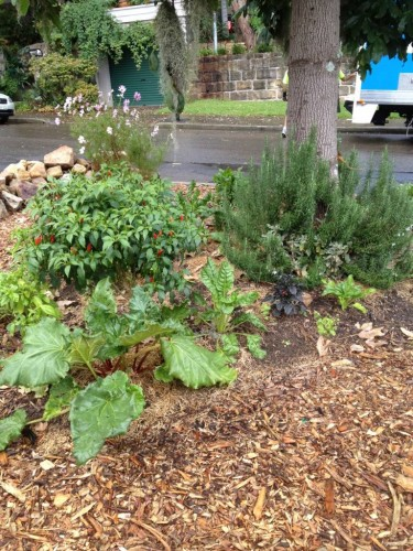 'Old Man's Beard' with a community vegetable garden