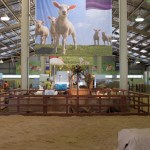 Win Tickets to the Easter Show
