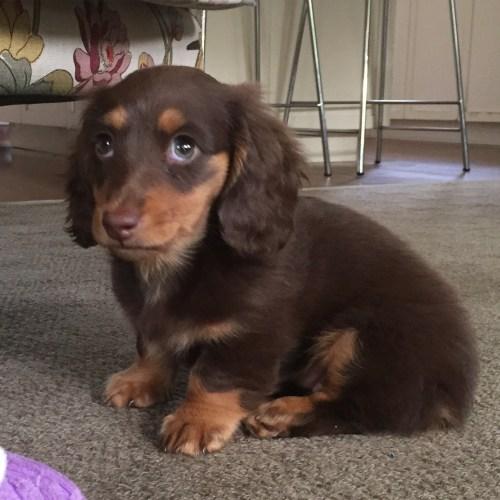 Coco at 10 weeks