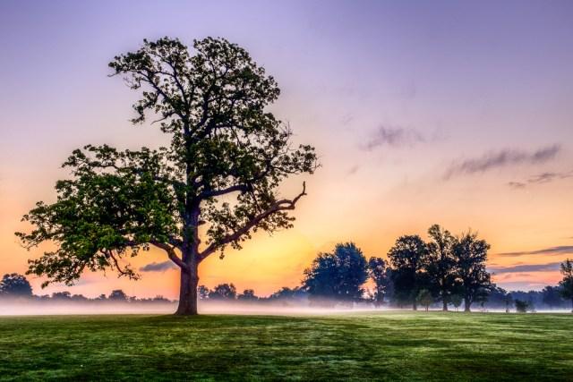 Foggy meadow at dawn