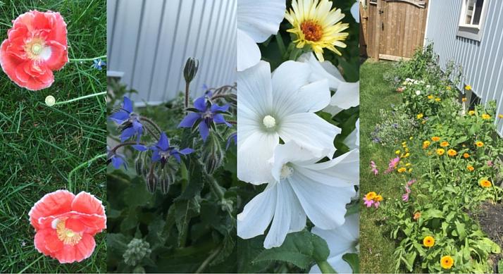 Garden Featured