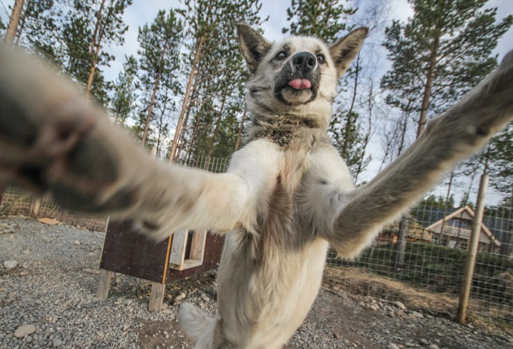 Husky Selfies | How Far From Home
