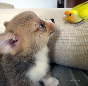 cute puppy and lovebird playing together!