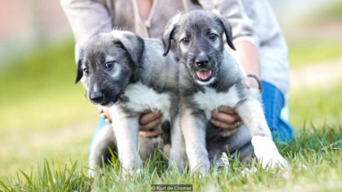 World's First Identical Puppies
