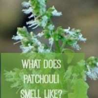 What Does Patchouli Smell Like?