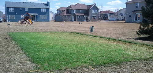 grass backyard hockey rink