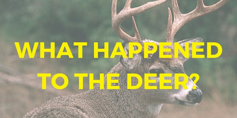 What Happened To The Deer
