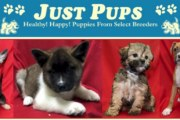 "State Files Action Against Four ""Just Pups"" Pet Stores and their Owner for Allegedly Selling Sick Puppies and Other Consumer Fraud Violations"