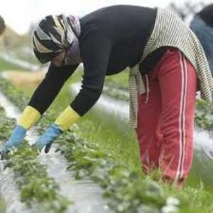 El sector agrícola es el que ha hecho bajar el paro en diciembre con más fuerza.