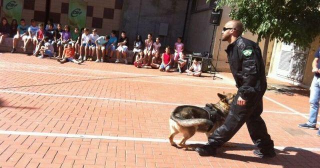 Curso de adiestramiento de perros.