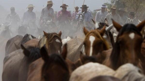 Tradicional saca de yeguas en Almonte, este martes. (Julián Pérez)