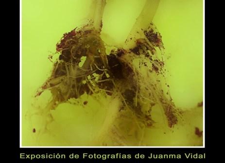 Cartel anunciador de la exposición de Juanma Vidal.
