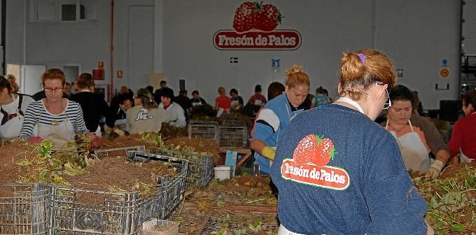 Fresón de Palos es una de la empresas agroalimentarias más importantes de Andalucía.