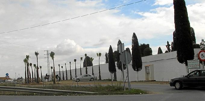Algunas de las palmeras que se han plantado.