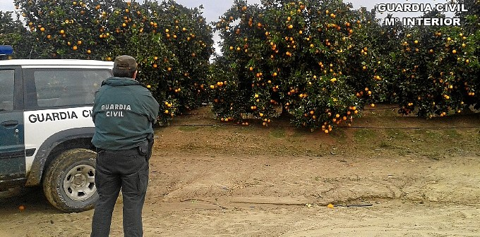 22-01-14 Robo naranjas