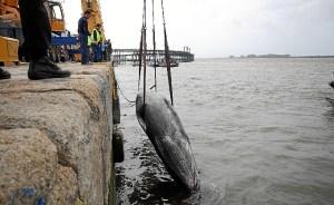 ballena Huelva-04