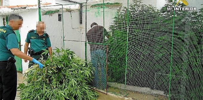08-08-14 marihuana