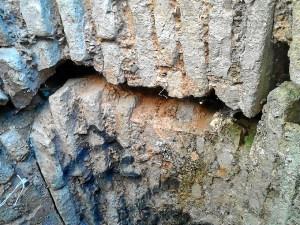 Fuente Vieja Huelva (2)