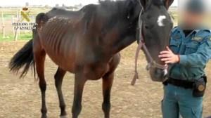 20151201_caballo 2_Seprona