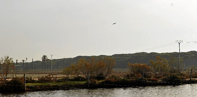 Pesca Salinas del Astur Recursos (13)