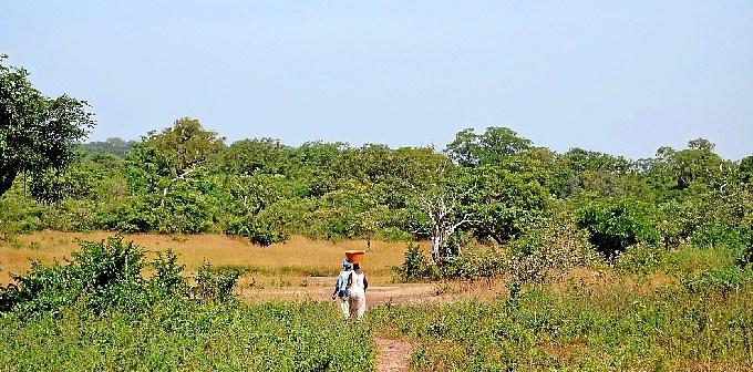 forestal cooperacion dos