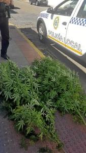marihuana vivienda Bellavista (1)
