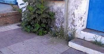 """Los socialistas denuncian la """"falta de limpieza"""" en el municipio."""
