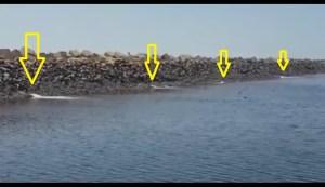 Balsas de dragados Puerto de Huelva (3)