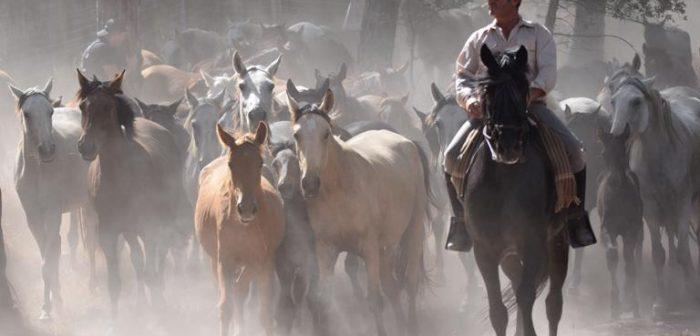 En Hinojos ha habido recogida de yeguas, pero no así en Almonte, rompiéndose una tradición de siglos.