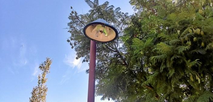 Rotura de farolas en el parque Moret de Huelva (8)