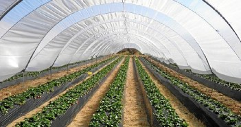 El sector agrícola no absorbe en esta época los incrementos que provoca el sector Servicios en el paro registrado en Huelva.