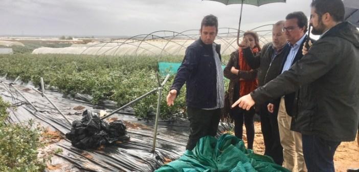 Visita del PP a fincas afectadas por el temporal