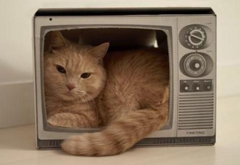 Vedette de la télé